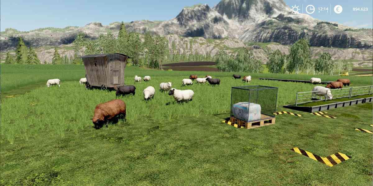 Sheep Pasture Without Fence