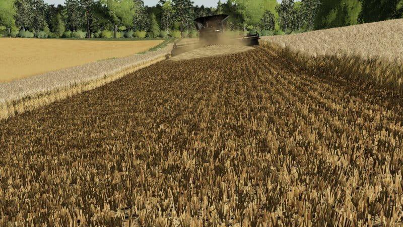 Barley / wheat texture