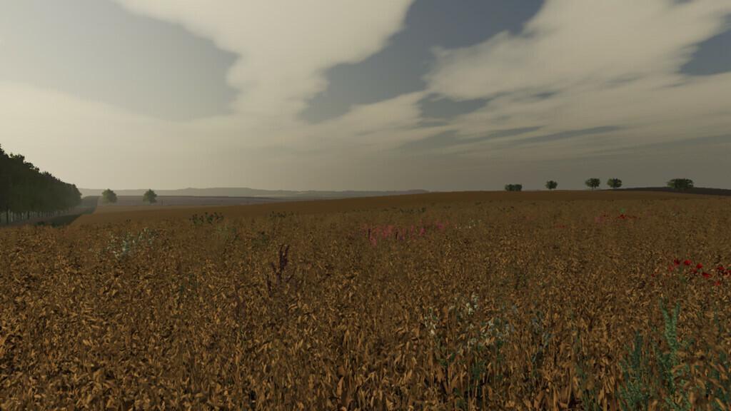 Wyther Farms