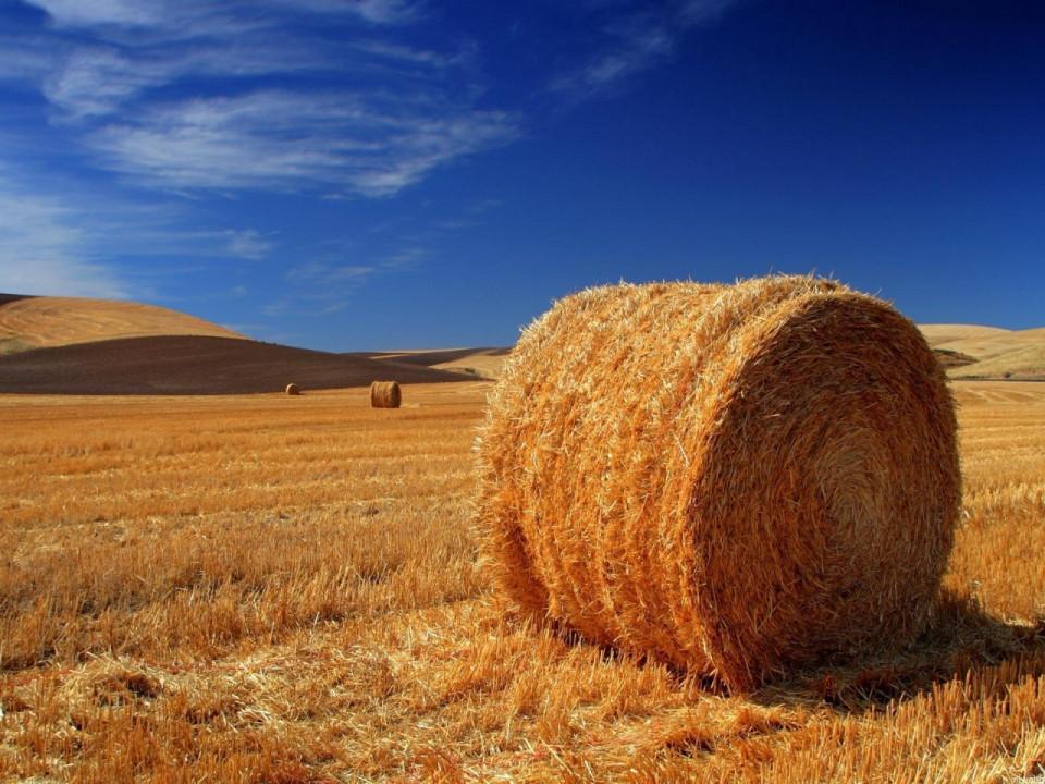 Straw in Farming Simulator 22